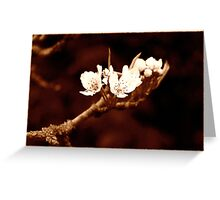 Vintage Bramley Blossom Greeting Card