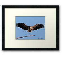 Spread Eagle Framed Print
