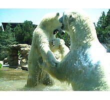 Polar Fight Photographic Print