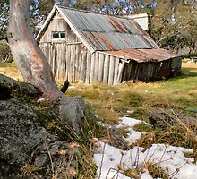 Autumn Snow at Wallace's Hut by David Haviland