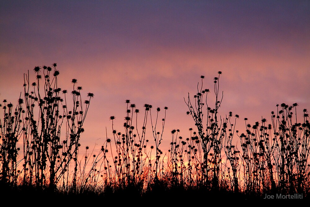 Thistles,Barrabool Hills by Joe Mortelliti