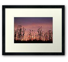 Thistles,Barrabool Hills Framed Print