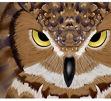 Owl in Acrylic Photographic Print