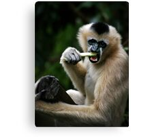 White Cheeked Gibbon Canvas Print
