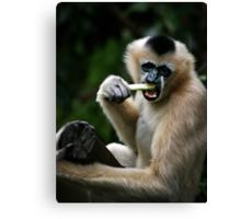 White Cheeked Gibbon Canvas Print