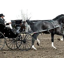 Black Horse and Carriage by Trish  Bowen