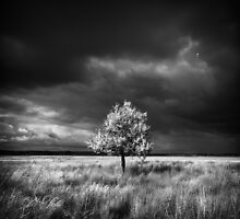 Storm Is Coming by Sergey Ryzhkov