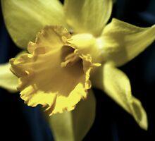 flower 08 by Kittin