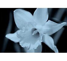 flower 11 Photographic Print