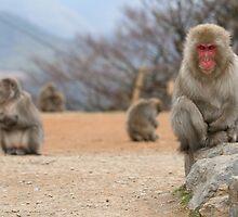 Monkey around by demistified