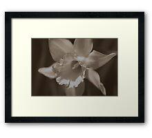flower 13 Framed Print