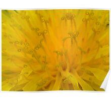 Rhapsody in yellow Poster