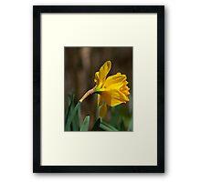flower 27 Framed Print