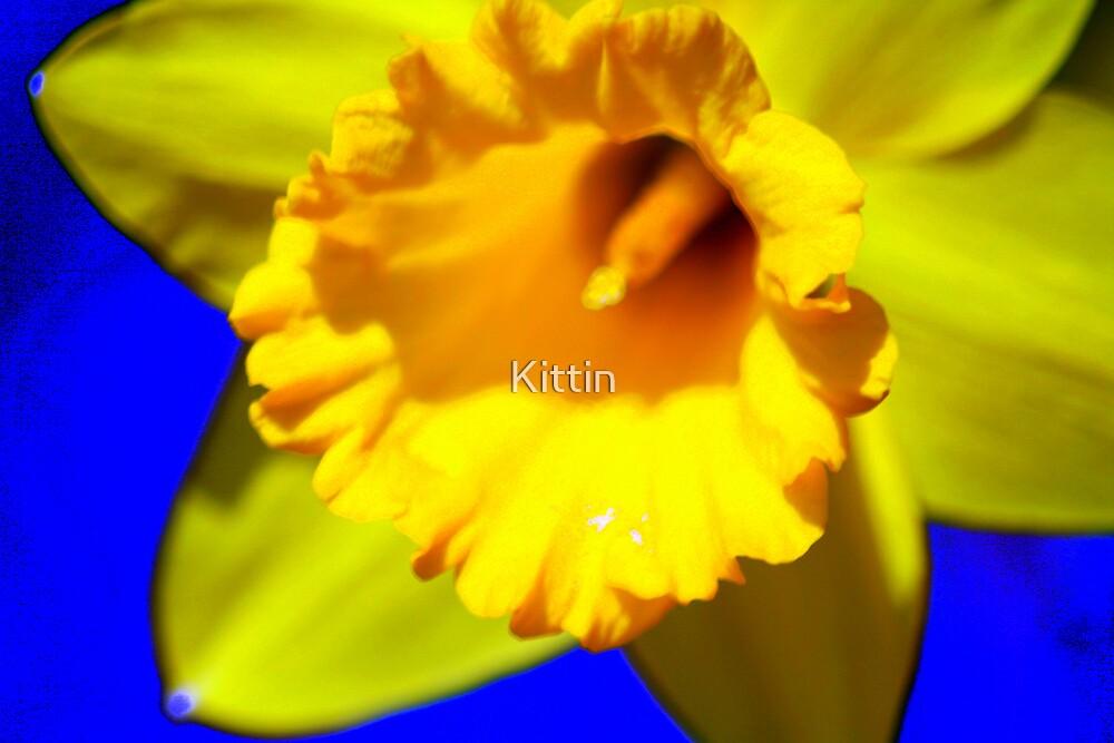 flower 30 by Kittin