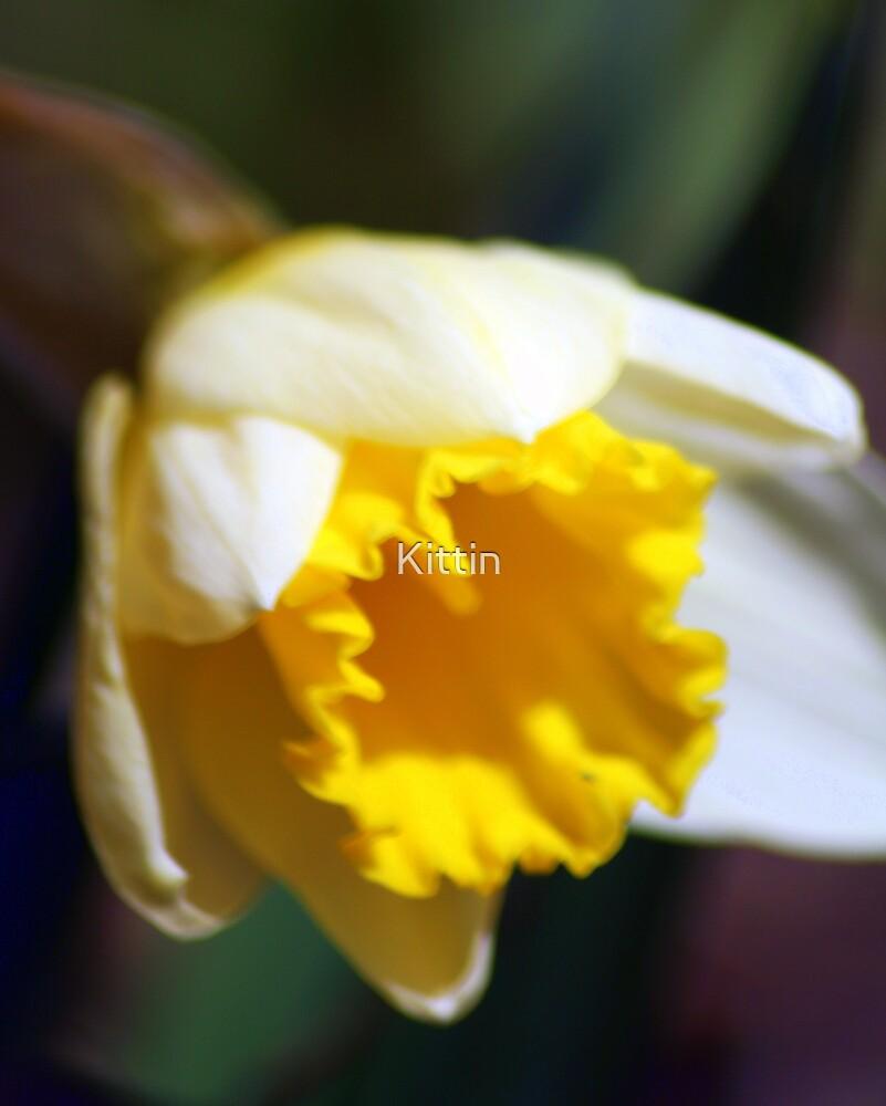flower 35 by Kittin