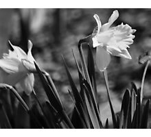 flower 43 Photographic Print