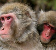Monkeys by demistified