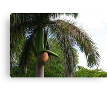Humour from Cuba Canvas Print