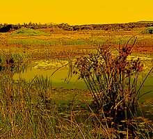 Reeds In A Pond by reflector