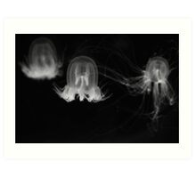 Three Jellyfish Art Print