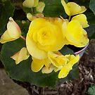 yellow by yellowpony
