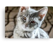 Little  Tabby Grey Kitten   Canvas Print
