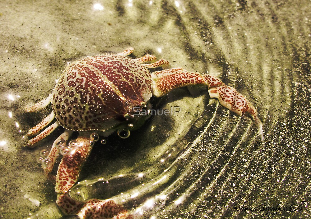 Mr. Crabs by Samuel Pevehouse