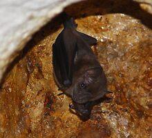 The Cutest Fruit Bat Ever Seen ...... by jdmphotography