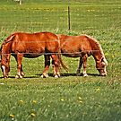 Pair Of Mares by Maria Dryfhout