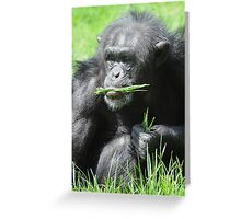 Buy image @ www.willoakley.com Rescued Monkey 1 Greeting Card