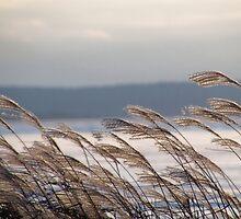 Winter winds by Janet Gosselin
