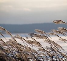 Winter winds by Janet Gosselin