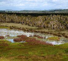 Eubenangee Swamp II by Janine  Hewlett