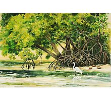 Mangrove Morning Photographic Print