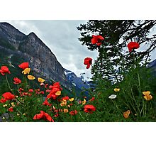 Peaks and Poppies Photographic Print