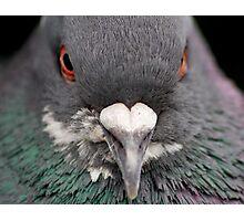 Pigeon Portrait Numero Dos Photographic Print