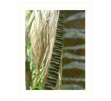 bamboo sticks - lord howe island collection Art Print