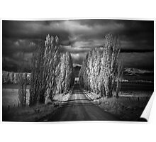Autumn in Black and White Poster
