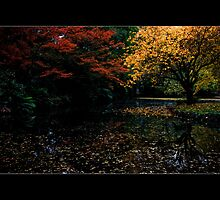 Colors of Autumn by Samantha Cole-Surjan