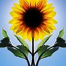Symflower by Richard Heath