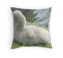 Peek-A-Boo - Two Black Swan Cygnets Throw Pillow