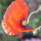 petal view by budrfli