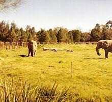 Elephants by Gregory John O'Flaherty