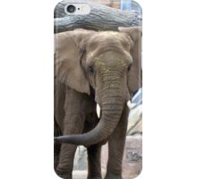 Elephant Ears  iPhone Case/Skin