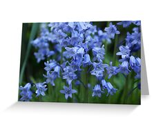 Bluebells III Greeting Card