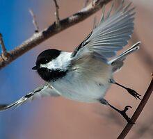 Spreading my wings by Eivor Kuchta