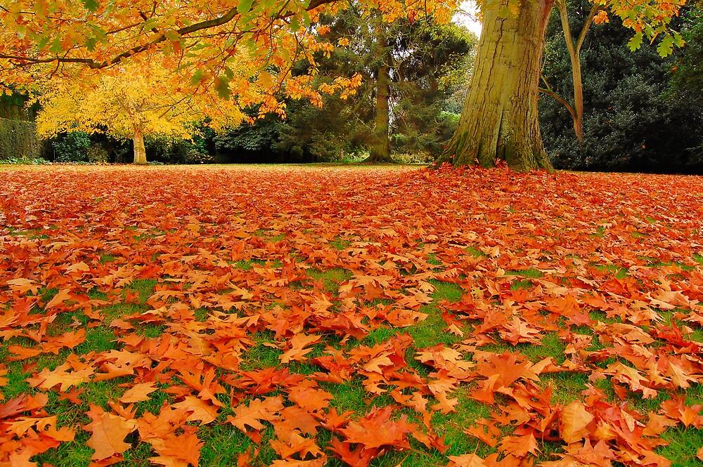 Autumns Carpet by Andrew Leighton