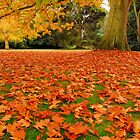Autumns Carpet by Andrew Leighton