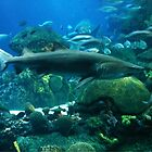 Shark World by Peace N Freedom by Design