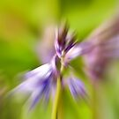 Flower Blur 2 by Jenn Ridley